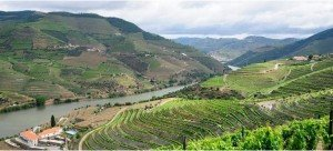 Wines and Tours - Douro Valley