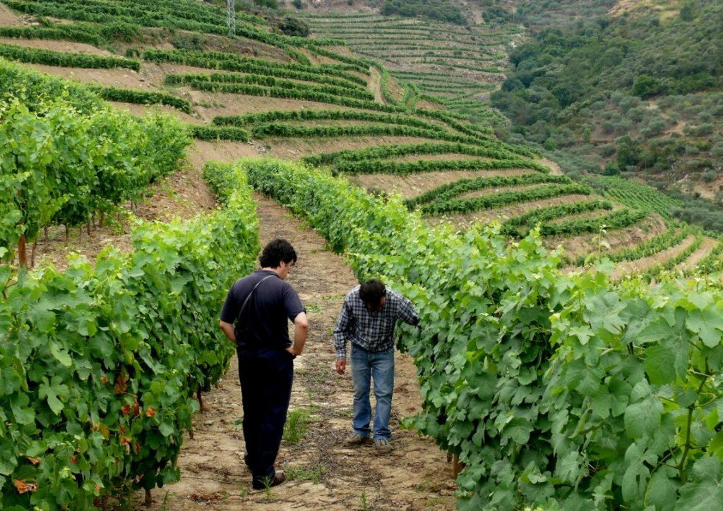 Douro Valley - Vineyards