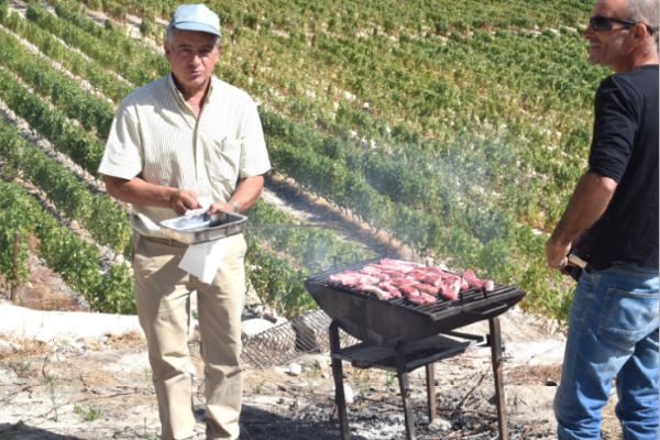 BBQ on the vineyard experience