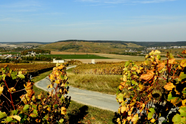Champagne vines and beyond