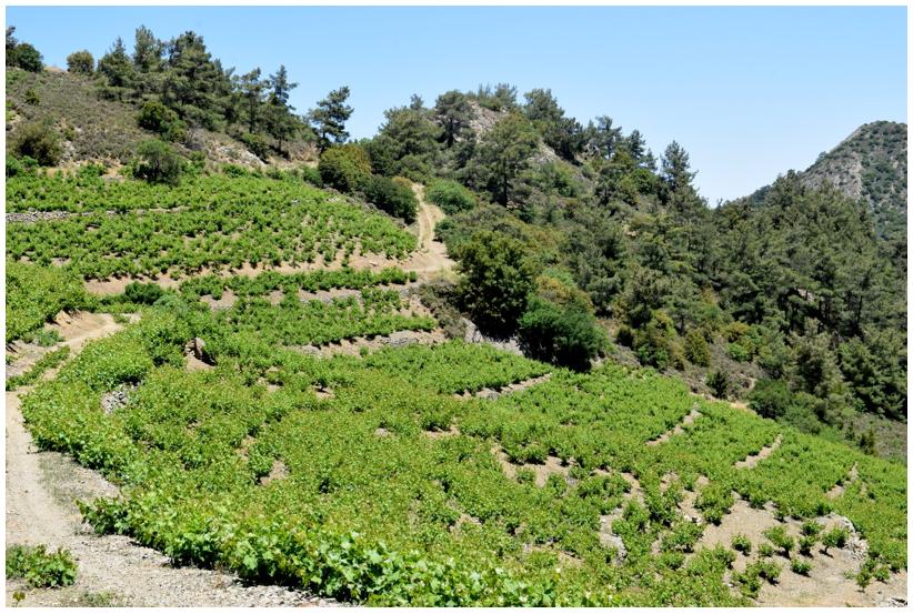 Santa Irene Winery in Cyprus